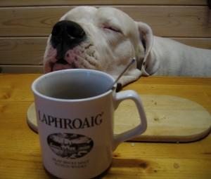 lonzo with laphoaig mug 2